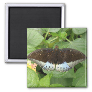 Imán tropical bonito de la mariposa