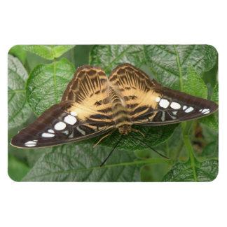 Imán tropical bonito del premio de la mariposa de