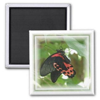 Imán tropical del cuadrado de la mariposa