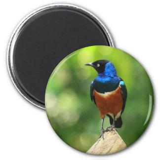 Imán tropical del pájaro