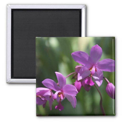Imán tropical púrpura de las flores