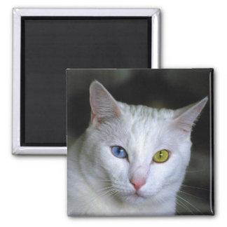 Imán turco del gato del angora