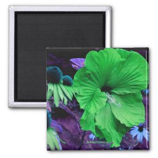 Imán verde de la fotografía de la flor del hibisco