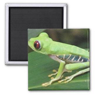 Imán verde del cuadrado de la rana arbórea de Red