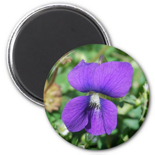 Imán violeta