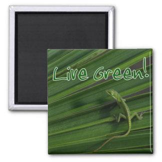 Imán vivo del lagarto verde