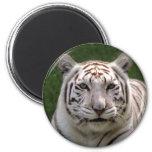 Imanes blancos del tigre imán