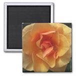 Imanes color de rosa cuadrados del flor imán de nevera