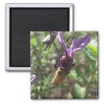 Imanes de la abeja de la lavanda imán
