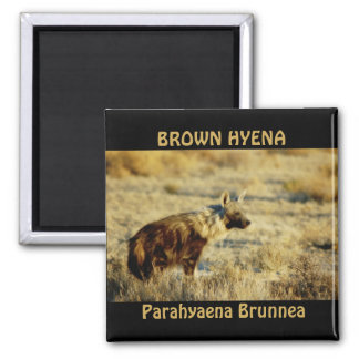 Imanes de la fauna del hyena de Brown Imán Cuadrado