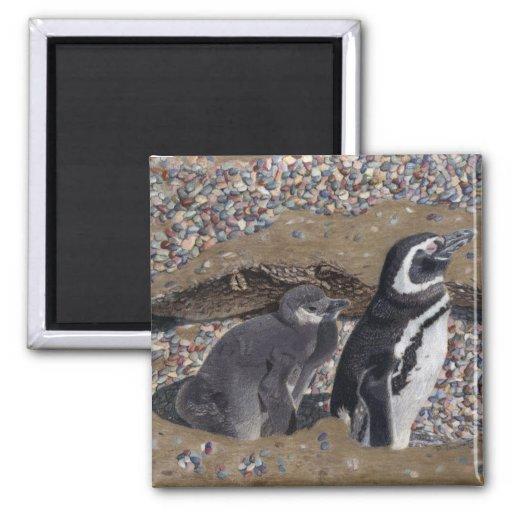Imanes de los pingüinos de la madre y del bebé imán cuadrado