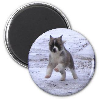 Imanes del perrito de Akita Imán Redondo 5 Cm