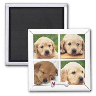 imanes del perro de la foto del instagram imán cuadrado
