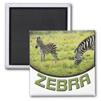 Imanes del safari de la fauna de la cebra y del imán cuadrado