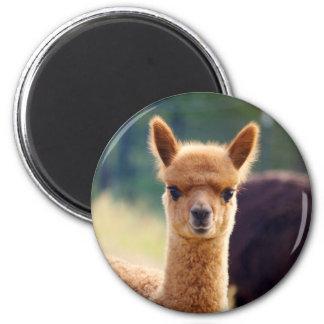 Imanes hermosos de la alpaca imán redondo 5 cm
