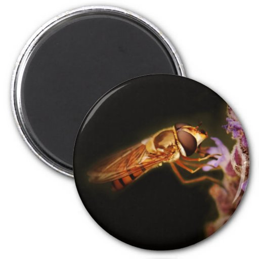 Imanes macros del entomólogo de la fotografía imán redondo 5 cm