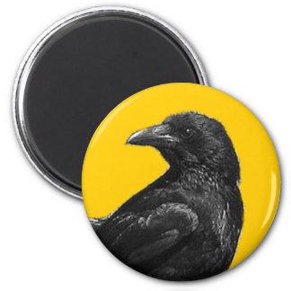 Imanes negros del cuervo imanes