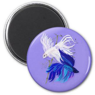 Imanes siameses blancos azules de los pescados de  iman