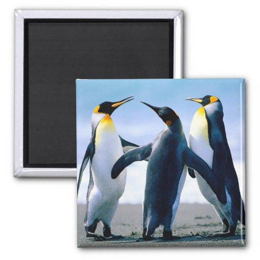 ímãs personalizados para sua casa ou escritório ima de geladeira