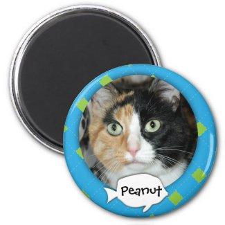 Personalized Argyle Cat Photo