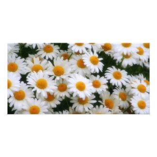 IMG_0066  Daisy Lovers Card