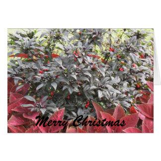 IMG_0070, Merry Christmas Card