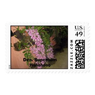 IMG_0075, Den. Superbum Honohono Stamp