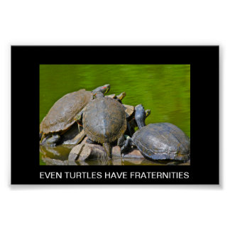 IMG_0131.JPG, EVEN TURTLES HAVE POSTER