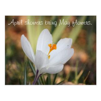 IMG_0371, duchas de abril traen las flores de mayo Tarjetas Postales