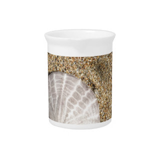 IMG_0578.JPG  Sandollar seashell on beach Pitcher