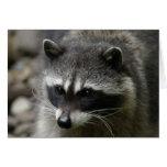 IMG_0667_raccoon_5x7 Felicitacion