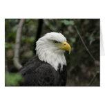 IMG_0673-eagle_5x7 Tarjeton