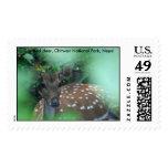 IMG_0725, ciervos manchados, parque nacional de Envio