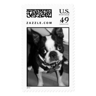 IMG_0932 STAMPS