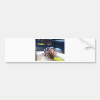 IMG_0982 CAR BUMPER STICKER