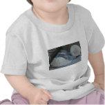 IMG_1498 (3).jpg Camisetas