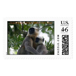 IMG_1578 Gray Langurs Chitwan National Park Stamps