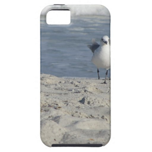 IMG_2329.JPG iPhone 5 PROTECTORES