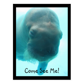 IMG_2576, Come See Me! Postcard