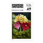 IMG_2644Gerber Daisys, use Postage