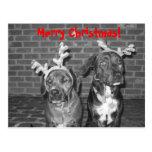 ¡IMG_3721_2, Felices Navidad! Tarjeta Postal