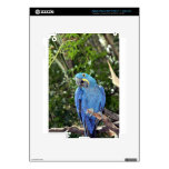 IMG_5169.JPG PEGATINAS SKINS PARA iPad 3