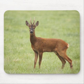 IMG_5480 MOUSE PAD
