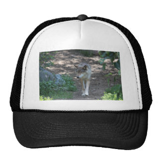 IMG_8057 HATS