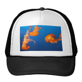 IMG_8478 TRUCKER HAT