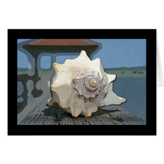 IMG_9615 conch Card