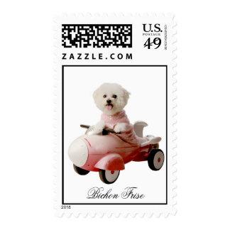 IMG_9658-F1 copy, Bichon Frise Stamp