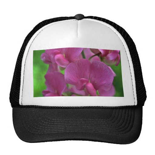 Imitating The Orchids Hats