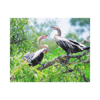 Immature Anhingas Wrapped Canvas Canvas Print
