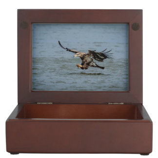 Immature Bald Eagle diving for a fish Memory Box